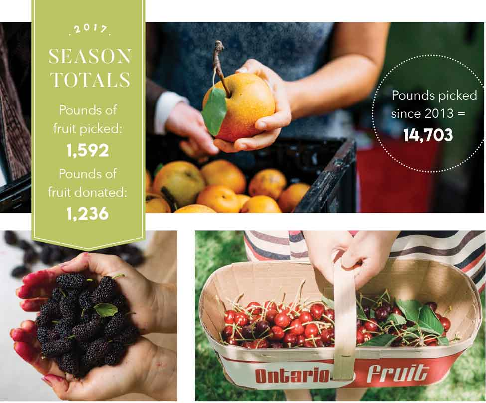 Sharing The Bounty – Your Fruit Trees Make A Difference