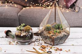 Airplants and Succulents