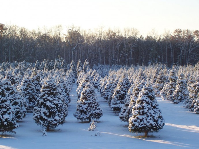 Just Cut Artificial Christmas Trees