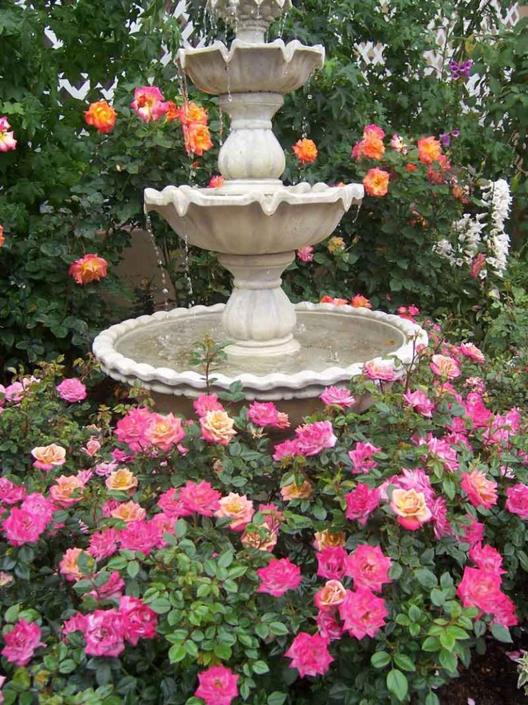 roses-around-a-water-fountain_web