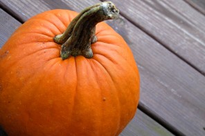 "The Great Pumpkin – ""Gourd"" yourself this fall with family fun and local pumpkins"