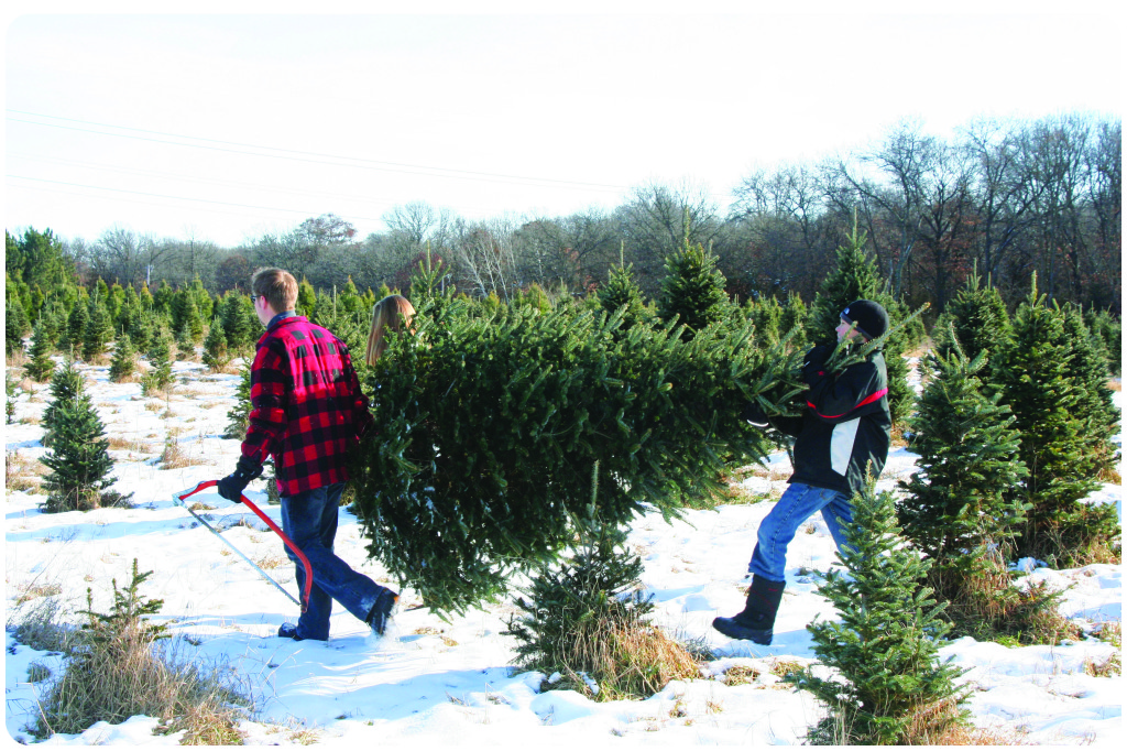 Of course, you can go select your tree whenever you choose and when you do,  spending the day outdoors finding the perfect tree will make lasting  memories ... - A Tree To Trim €� Pick Your Own At A Local Christmas Tree Farm - Look