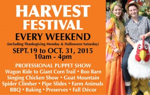 Springridge Farm Harvest Festival event flyer