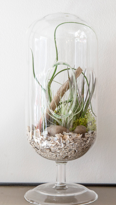 Centro_Airplants