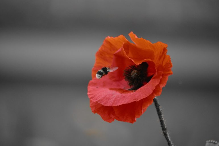Remembrance Day Halton